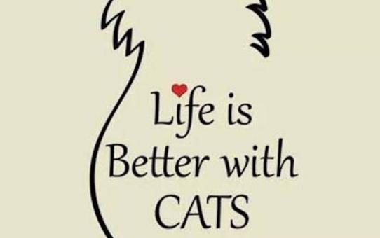 Édes cicák - szuper képek és mondatok a macskákról