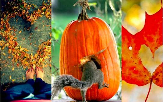 Az ősz szépségei