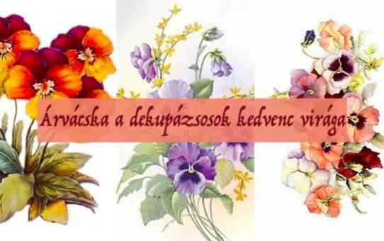 Árvácska a dekupázsosok kedvenc virága